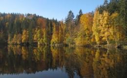 2012 10 20 Herbstwaldwanderung 15