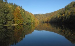 2012 10 20 Herbstwaldwanderung 16