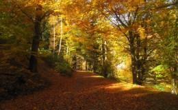 2012 10 20 Herbstwaldwanderung 19
