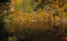 2012 10 20 Herbstwaldwanderung 20