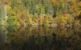 2012 10 20 Herbstwaldwanderung 21