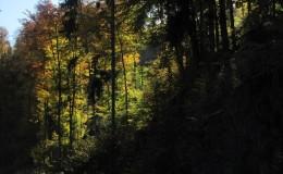 2012 10 20 Herbstwaldwanderung 26